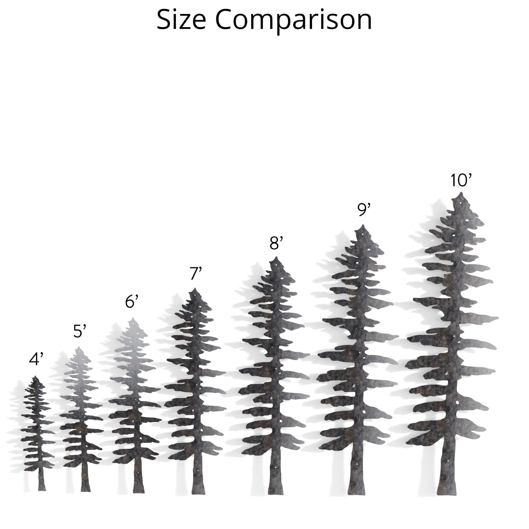 Sitka spruce - Tree